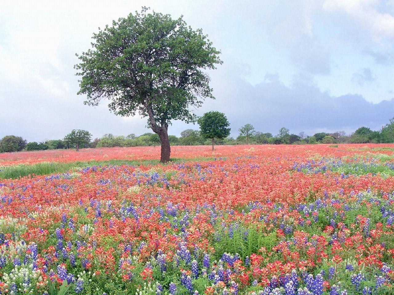Fond d cran de printemps paysage for Fond ecran ete fleurs