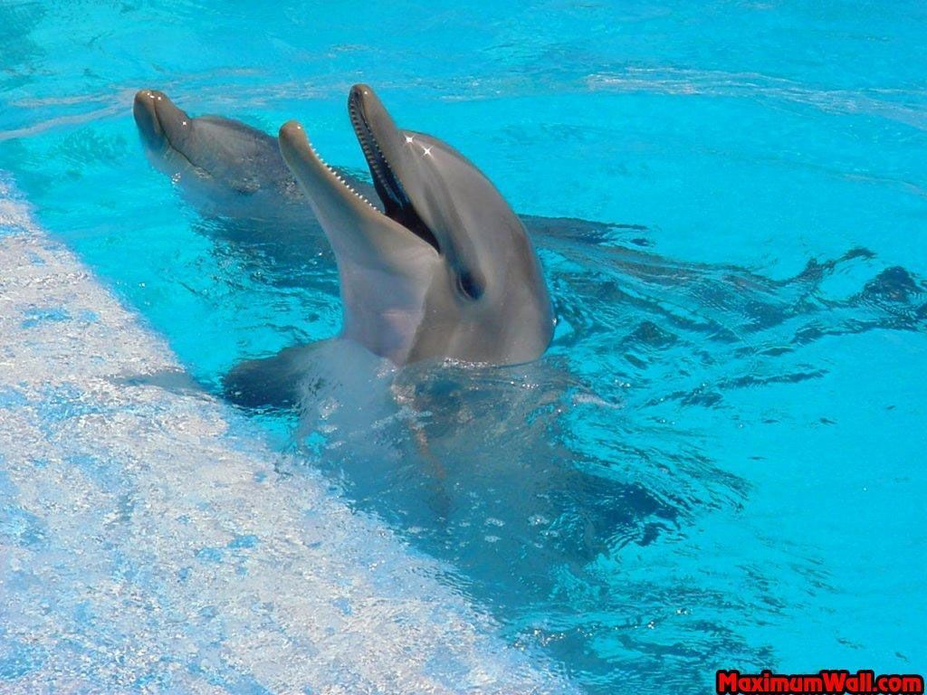 Dauphins for Piscine les dauphins
